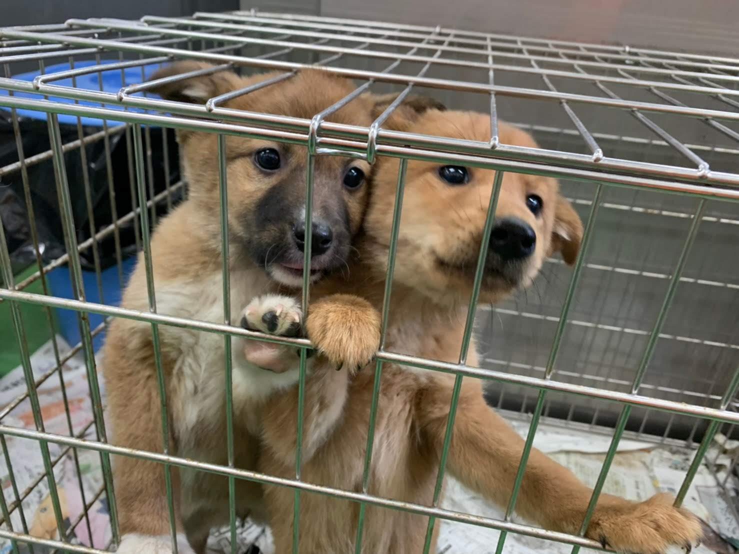 動物愛護センターへの物資援助ご協力のお願い
